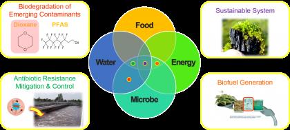 Mikrobiologi Lingkungan (P)